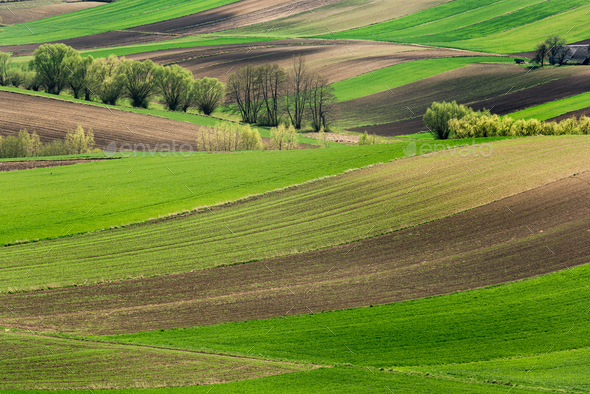 Rolling Green Hills. Beautiful Farmland and Coutryside at Spring in Poland - Stock Photo - Images