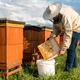 Beekeeper or Apiarist Collecting Pollen from Beehive. Healthy Bio Food and Beekeeping. - PhotoDune Item for Sale