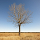 Naked tree on the countryside. Loneliness and quite winter landscape. - PhotoDune Item for Sale