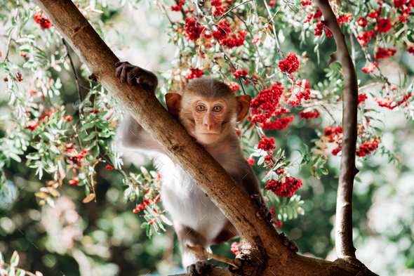 Cute little monkey sits on the tree - Stock Photo - Images