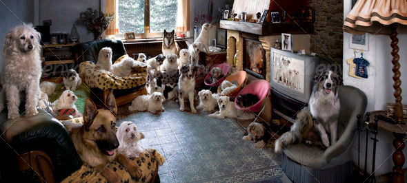 Portrait of 24 dogs in a living room in front of a TV - Stock Photo - Images