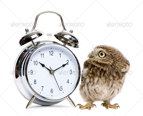 Little Owl, 50 days old, Athene noctua, in front of a white background with alarm clock - Stock Photo - Images