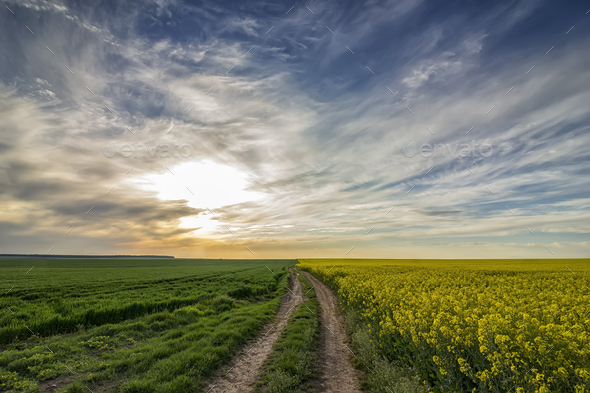 country road - Stock Photo - Images