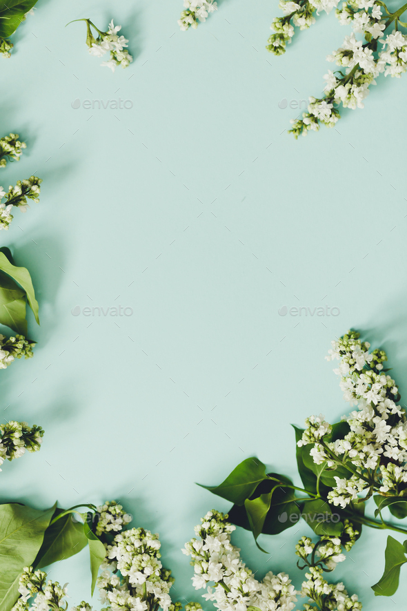 Spring flowers. Frame of twigs of blooming white lilac on a blue background - Stock Photo - Images