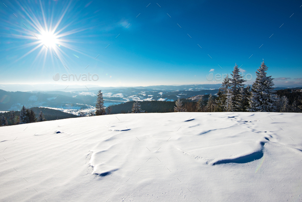 Fascinating sunny landscape of a winter forest - Stock Photo - Images