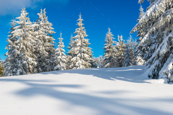 Sunny winter landscape of snowdrifts - Stock Photo - Images