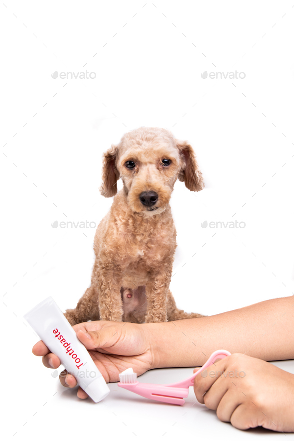 Hand holding toothbrush and toothpaste with pet dog in background - Stock Photo - Images