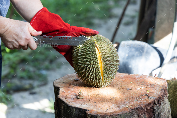 Series of person cutting open organic durian with knife - Stock Photo - Images