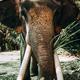 Closeup elephant in Asian jungle. - PhotoDune Item for Sale