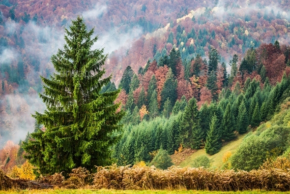 Beautiful majestic landscape with conifer trees on mountain - Stock Photo - Images
