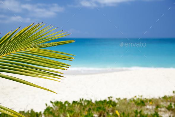 Palm Leaf And Caribbean Beach, Antigua - Stock Photo - Images