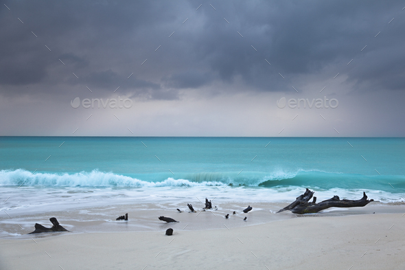 Caribbean Beach Driftwood With Dramatic Sky, Antigua - Stock Photo - Images