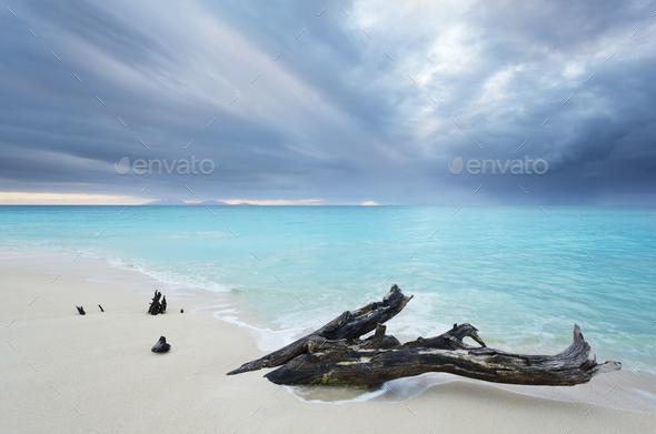 Caribbean Beach Driftwood With Dramatic Sky, Antigua - Stock Photo - Images