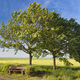 Bench And Green Fields - PhotoDune Item for Sale