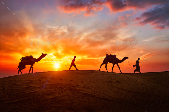 Indian cameleers camel driver with camel silhouettes in dunes on sunset. Jaisalmer, Rajasthan, India - Stock Photo - Images