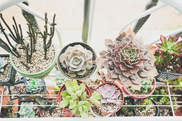 Little garden of mixed succulent plants - Stock Photo - Images
