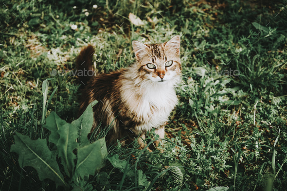 Amazing and beautiful cat outdoors - Stock Photo - Images