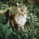 Amazing and beautiful cat outdoors - PhotoDune Item for Sale