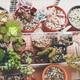 Little garden of mixed succulent plants - PhotoDune Item for Sale
