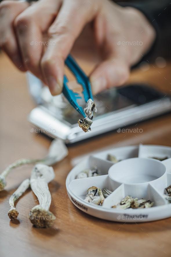 Micro Dosing with Psilocybin Magic Mushrooms - Stock Photo - Images