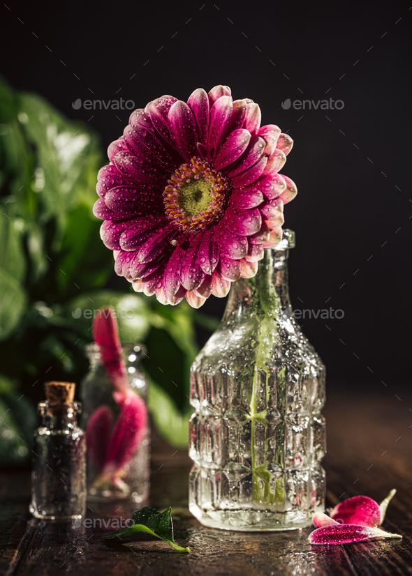 Gerbera pink flower - Stock Photo - Images