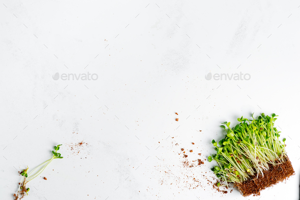Organic natural microgreen with roots on a light grey marble background - Stock Photo - Images