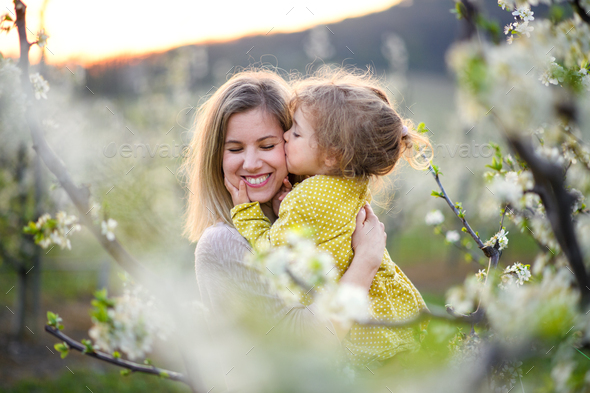 Mother with small daughter standing outdoors in orchard in spring, kissing - Stock Photo - Images