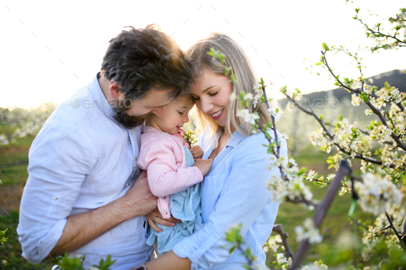 Family with small daughter standing outdoors in orchard in spring, hugging - Stock Photo - Images