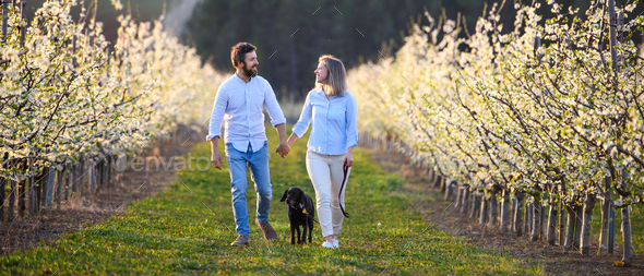 Front view of couple with dog walking outdoors in orchard in spring - Stock Photo - Images