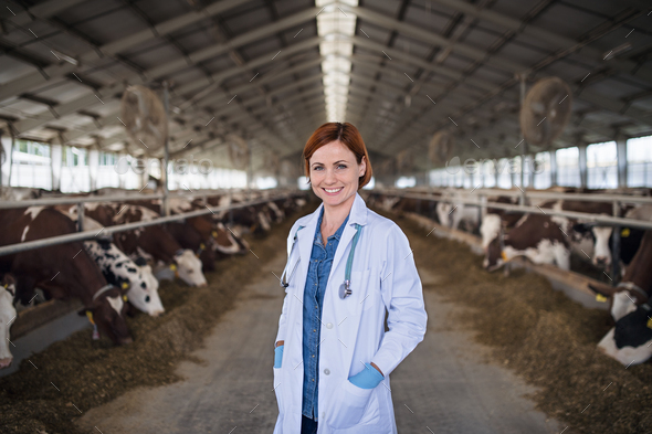 Woman veterinary doctor standing on diary farm, agriculture industry - Stock Photo - Images