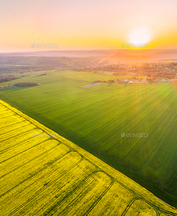 Aerial view with rapeseed field - Stock Photo - Images