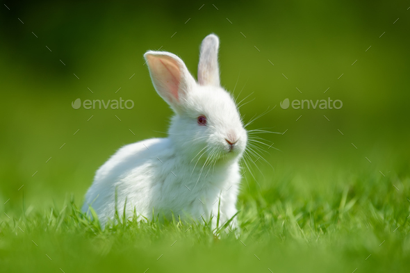 Funny  little white rabbit on spring green grass - Stock Photo - Images