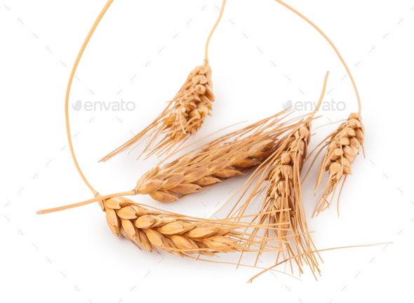 Ears of wheat - Stock Photo - Images