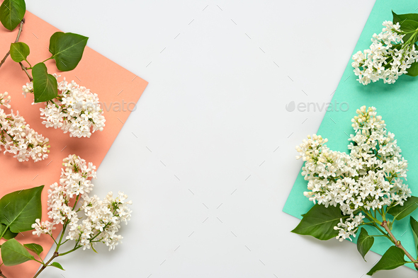 Blossom - Stock Photo - Images