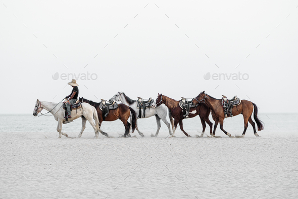 Caballos - Stock Photo - Images