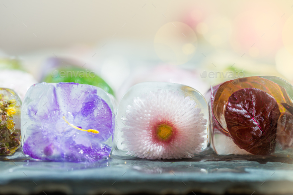 Different Beautiful Frozen Flowers in the Ice Cubes - Stock Photo - Images