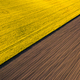 Drone view above yellow colza rape fields, agriculture concept from drone perspective - PhotoDune Item for Sale