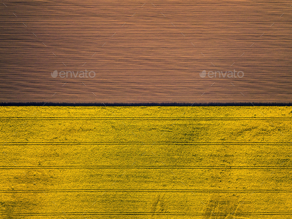 Drone view above yellow colza rape fields, agriculture concept from drone perspective - Stock Photo - Images