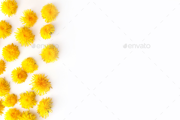 Fresh yellow dandelion buds on white background. Summer conceprt - Stock Photo - Images