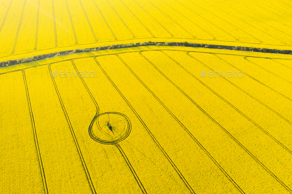 Aerial drone top view of yellow blooming field - Stock Photo - Images