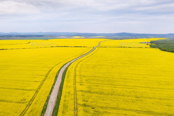Aerial drone view of ground road in yellow fields - Stock Photo - Images