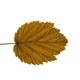 Autumn Leaf On White Background - PhotoDune Item for Sale