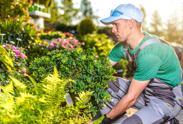 Male Gardener Takes Care Of Yard Landscape. - Stock Photo - Images