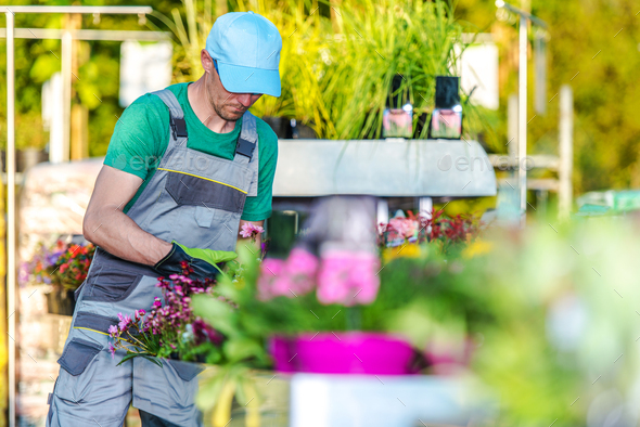 Garden Department Store Worker Takes Care Of Plants. - Stock Photo - Images