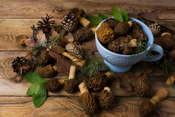 Blue bowl with black morel mushrooms on the wooden background - Stock Photo - Images