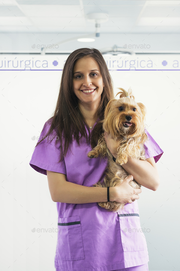 Cheerful women veterinary holding a little dog. - Stock Photo - Images