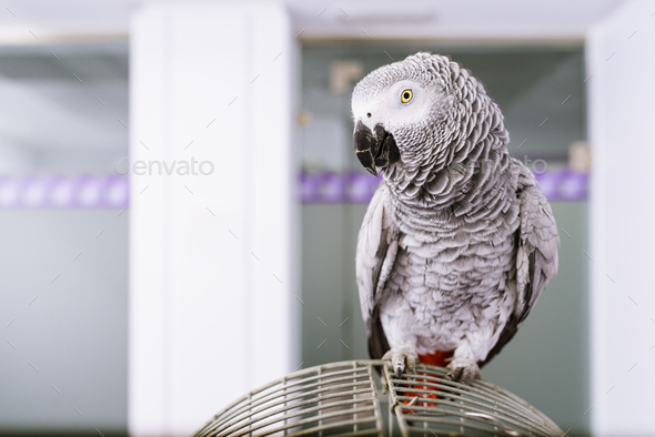 Portrait of a parrot bird. - Stock Photo - Images