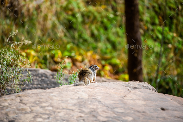 Squirrel portrait on a rock in nature - Stock Photo - Images