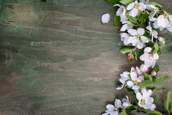 Blooming apple tree. Spring background - Stock Photo - Images