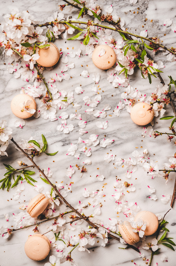 Sweet macaron cookies and white spring blossom flowers, copy space - Stock Photo - Images